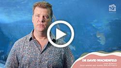 Dr David Wachenfeld