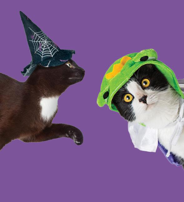 Halloween Cat Sale