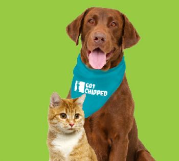 Free Microchipping Days 12568