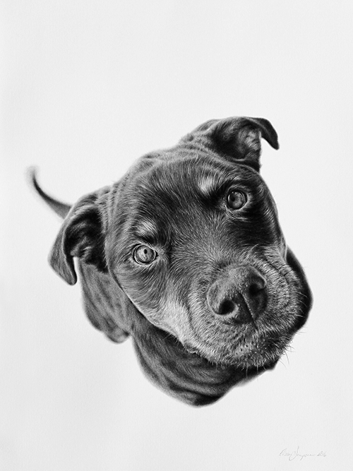 Elissa Sampson, <i>Unconditional, 2016</i>, graphite and charcoal on paper, 40 x 30 cm. Winner of the </i>Percival Animal Portrait Prize 2018</i>, Perc Tucker Regional Gallery, Townsville.